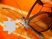Флеш игра Оранжевая бабочка