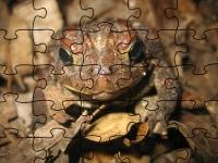 Флеш игра Американская жаба: Пазл