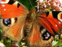 Флеш игра Бабочки: Поиск предметов