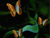 Флеш игра Бабочки