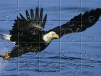 Флеш игра Белоголовый орлан: Пазл