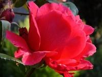 Флеш игра Царство цветов