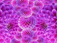 Флеш игра Цветы: Поиск предметов