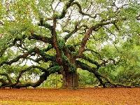 Флеш игра Деревья: Пазл