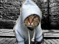 Флеш игра Гангста-кот