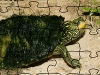 Флеш игра Географическая черепаха: Пазл