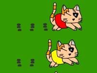 Флеш игра Гонка котов
