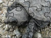 Флеш игра Каймановая черепаха: Пазл