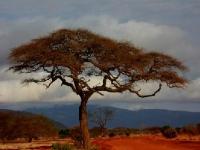 Флеш игра Кения: Пазл