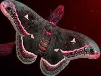 Флеш игра Коричневая бабочка