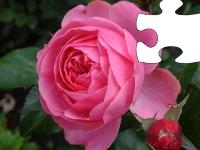 Флеш игра Королевство цветов: Роза