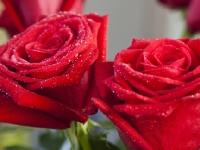 Флеш игра Красная роза: Пазл