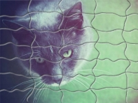 Флеш игра Красочный кот: Пазл