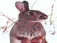 Флеш игра Кролик и зима