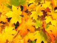 Флеш игра Листья