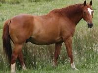 Флеш игра Лошадь: Пазл