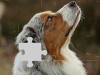 Флеш игра Мечтающий пес