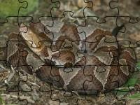 Флеш игра Медноголовый щитомордник: Пазл