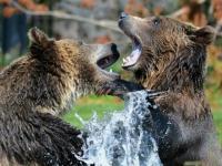 Флеш игра Медведи: Пазл