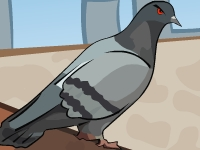 Флеш игра Месть голубя
