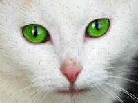 Флеш игра Милые котики: Пазл
