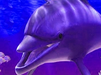 Флеш игра Морские коньки и дельфины