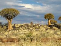 Флеш игра Намибия: Пазл