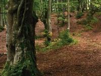 Флеш игра Найди монеты в лесу