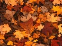 Флеш игра Осень: Поиск предметов