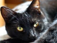 Флеш игра Открой милых кошек