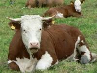 Флеш игра Открой животных на ферме