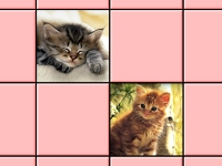 Флеш игра Пара милых котят