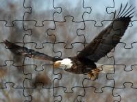 Флеш игра Пазл с белоголовым орланом