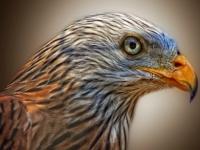 Флеш игра Пазл с хищными птицами