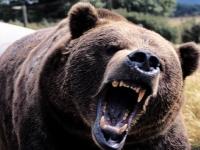 Флеш игра Пазл с медведями