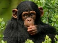 Флеш игра Пазл с обезьянкой