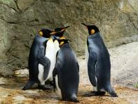 Флеш игра Пазл с пингвинами