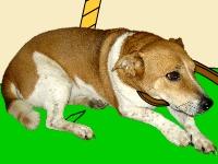 Флеш игра Побег с приюта для животных 2