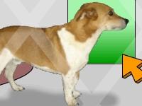 Флеш игра Побег с приюта для животных