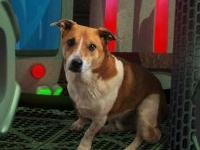 Флеш игра Побег странной собаки 5