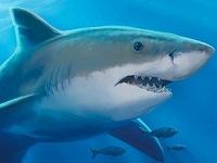 Флеш игра Подводный мир: Поиск отличий