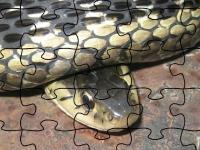 Флеш игра Подвязочная змея: Пазл