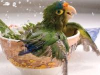 Флеш игра Поиск чисел с птичками