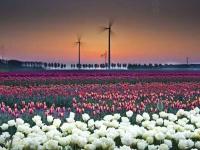 Флеш игра Полевые цветы: Поиск чисел