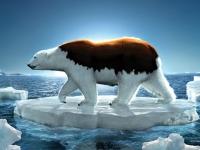 Флеш игра Полярный медведь: Пазл