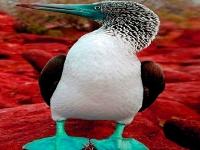 Флеш игра Птичка с синим клювом на побережье