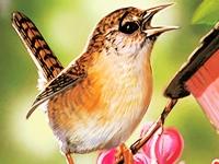 Флеш игра Птички: Поиск чисел