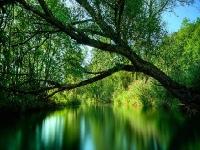 Флеш игра Река в лесу: Пазл
