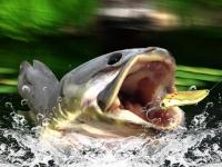 Флеш игра Рыбалка в тихой заводи