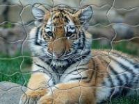 Флеш игра Сидящий тигр: Пазл
